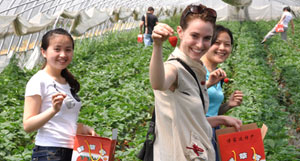 Strawberry Fields Forever: Berry-Picking Day Trips from Nanjing