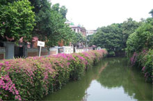 Dongshan Neighbourhood's Quiet and Historical Oasis