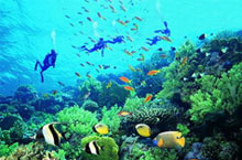 8 Fun Activities at Yalong Bay Undersea World in Sanya