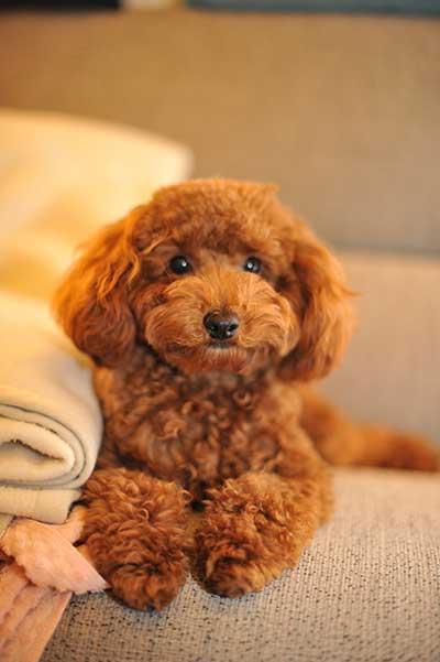 China S Top 10 Favorite Dog Breeds 外国人网 Echinacities Com