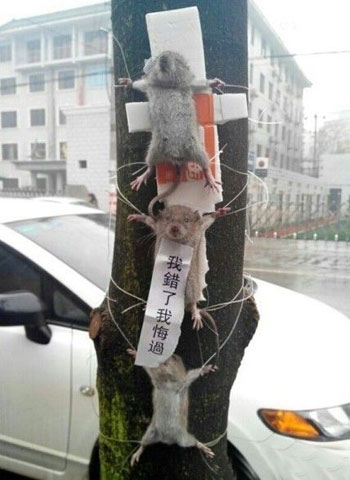 Thieving Rats are Put on Public Display, and Made an Example of for Other Rats