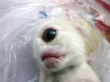 Weird One-Eyed Cyclops Kitten Born in Sichuan