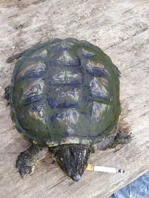 "Changchun Turtle Becomes ""Accidently"" Addicted to Smoking; Now Puffs 10 a Day"