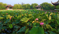 Wuxi Travel Tips