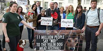 11 Million Sign Petition to Protest Yulin Dog Meat Festival