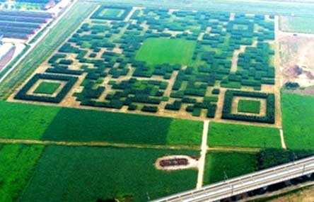 Chinese Village Makes Giant QR Code From Trees