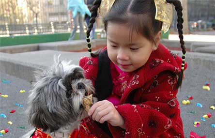 China's Horoscope for the Year of the Dog